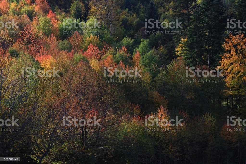 Yellow, orange and red autumn leaves, Germany royalty-free stock photo