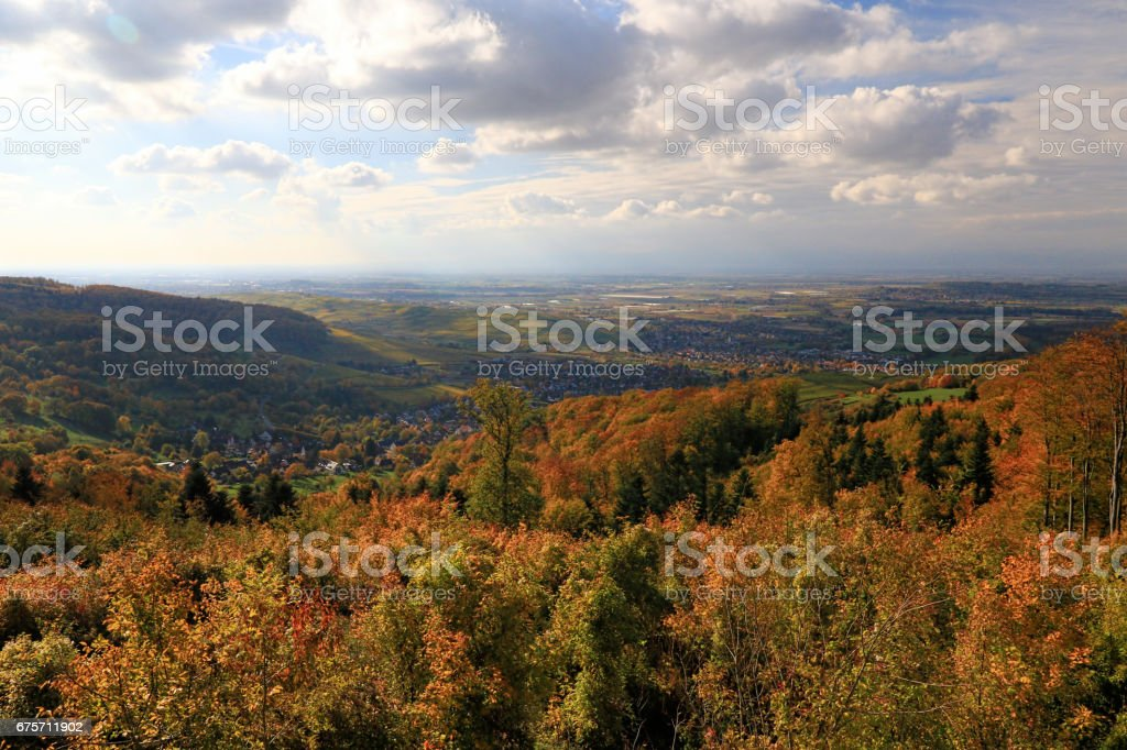 Yellow, orange and red autumn leaves, Germany 免版稅 stock photo