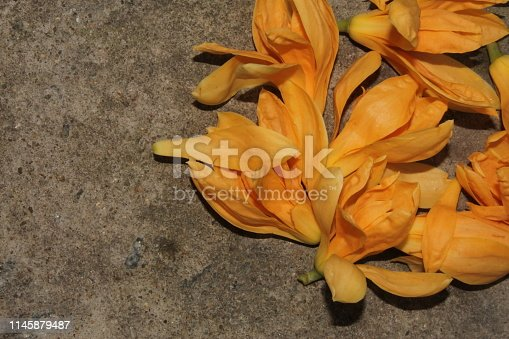Yellow orange michelia alba or magnolia champaca flowers.Beautiful background. Mother's, Valentines, Women's, Wedding Day. Top view with copy space. Place for text