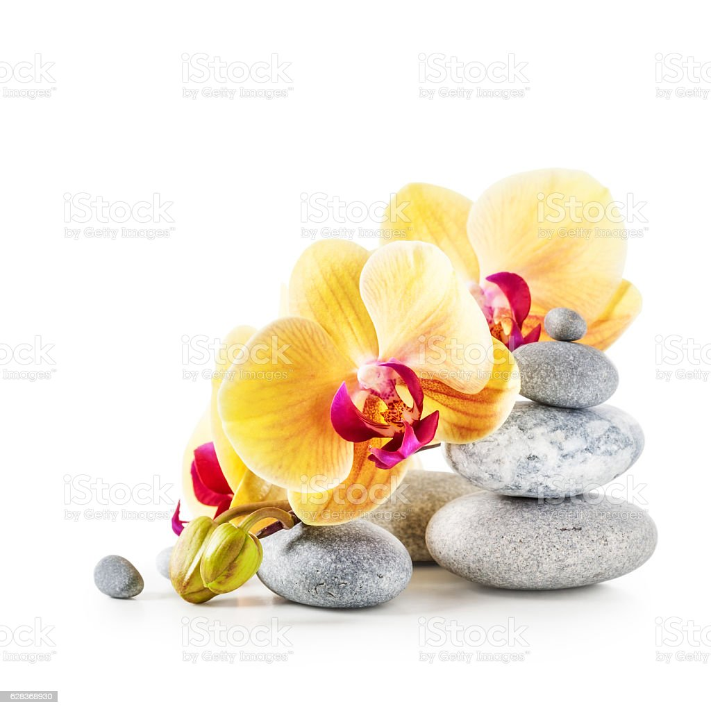 Yellow orchid flowers and spa stones stock photo