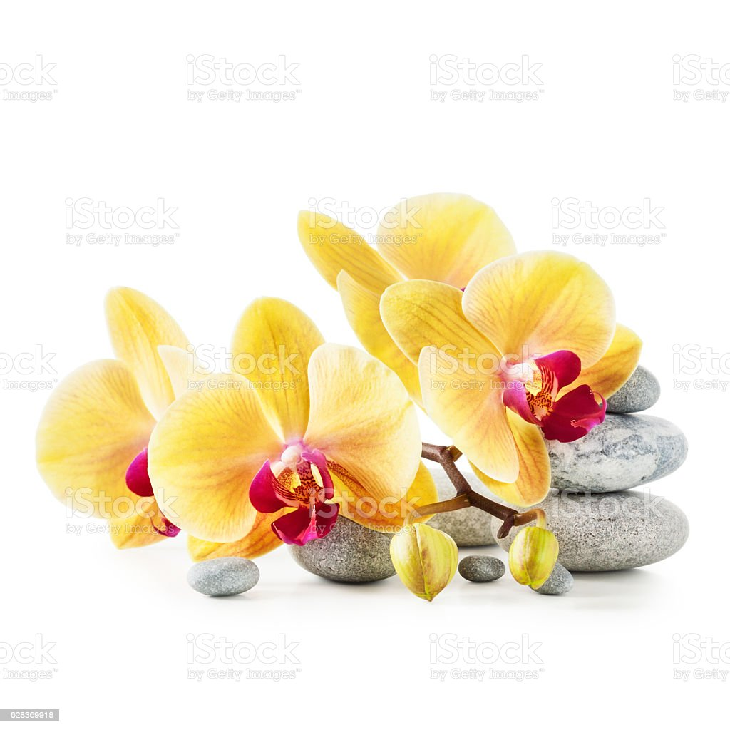 Yellow Orchid Flowers And Spa Stones Stock Photo More Pictures Of