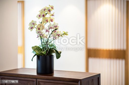 Yellow orchid in cozy living room.