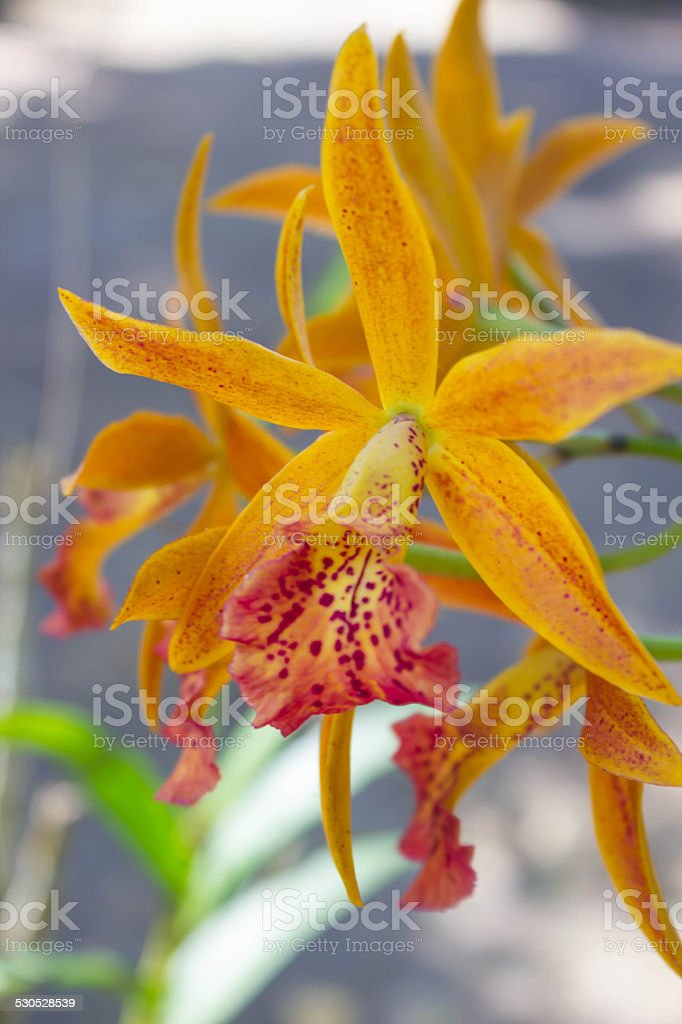 Yellow orchid in natural stock photo