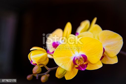 Orchid in a garden