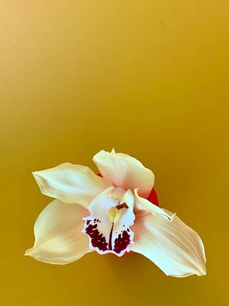 Gelbe Orchidee auf gelbem Hintergrund – Foto