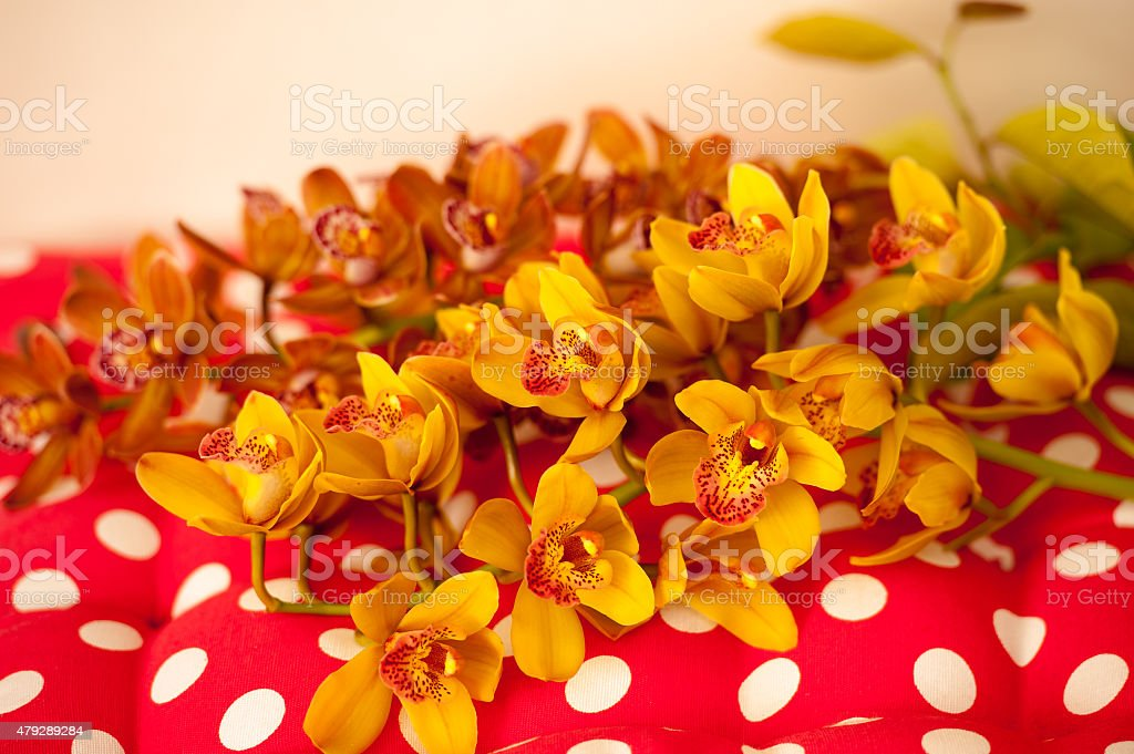 Yellow orchids on polka dot pillow stock photo