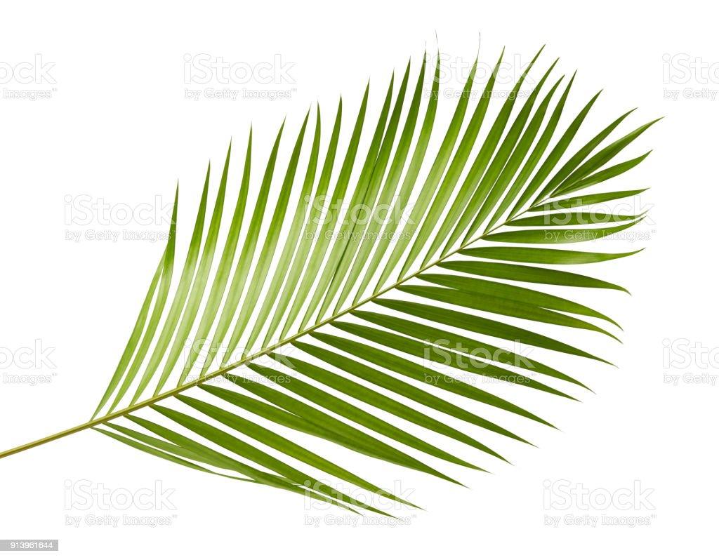 feuilles de palmier jaune ou feuilles de canne or palmier palmier areca feuillage tropical isol. Black Bedroom Furniture Sets. Home Design Ideas