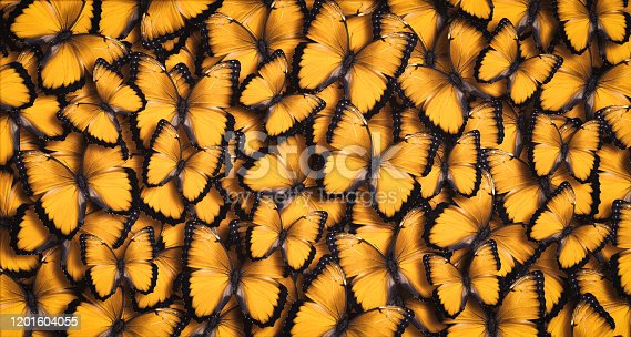 Large group of orange butterflies as a background.