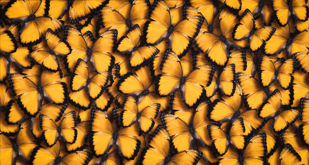 Yellow panoramic butterfly background picture id1201604055?b=1&k=6&m=1201604055&s=612x612&w=0&h=fbwc1m8ssgbikfe4euelziwuxceopvqj7agm1sixse4=