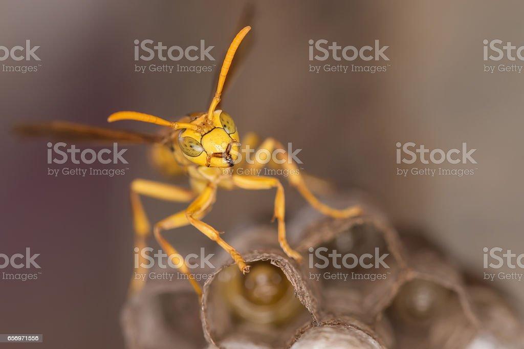 Amarillo Avispa de papel - foto de stock