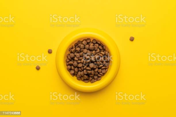 Yellow pet bowl picture id1147243888?b=1&k=6&m=1147243888&s=612x612&h=ia1imgmqcigux bpcx1z35kaoilfbco1pz5rcpucnbu=