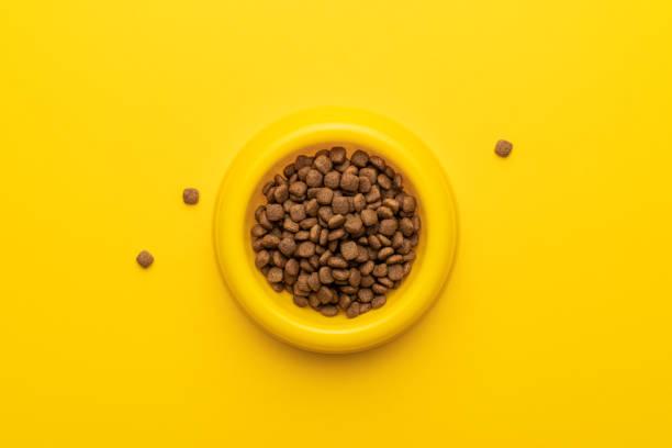 Yellow pet bowl picture id1147243888?b=1&k=6&m=1147243888&s=612x612&w=0&h=kollsu1r3xyucm5goa6laztbmnvzp bwwxnih9bbmdw=