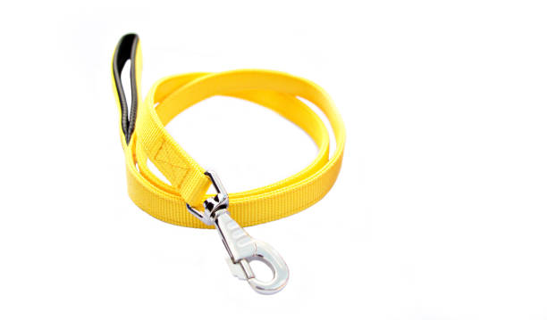 yellow pet leash with silver hook on isolated white background. - cat leash stock photos and pictures