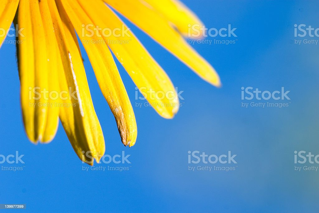 Gelbe Blütenblätter – Foto