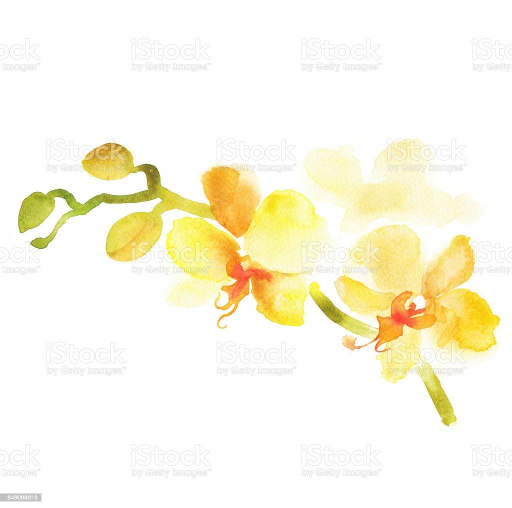 Gelbe Mother – Foto