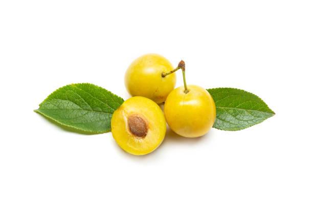 mirabelle de prune jaune - mirabelle photos et images de collection