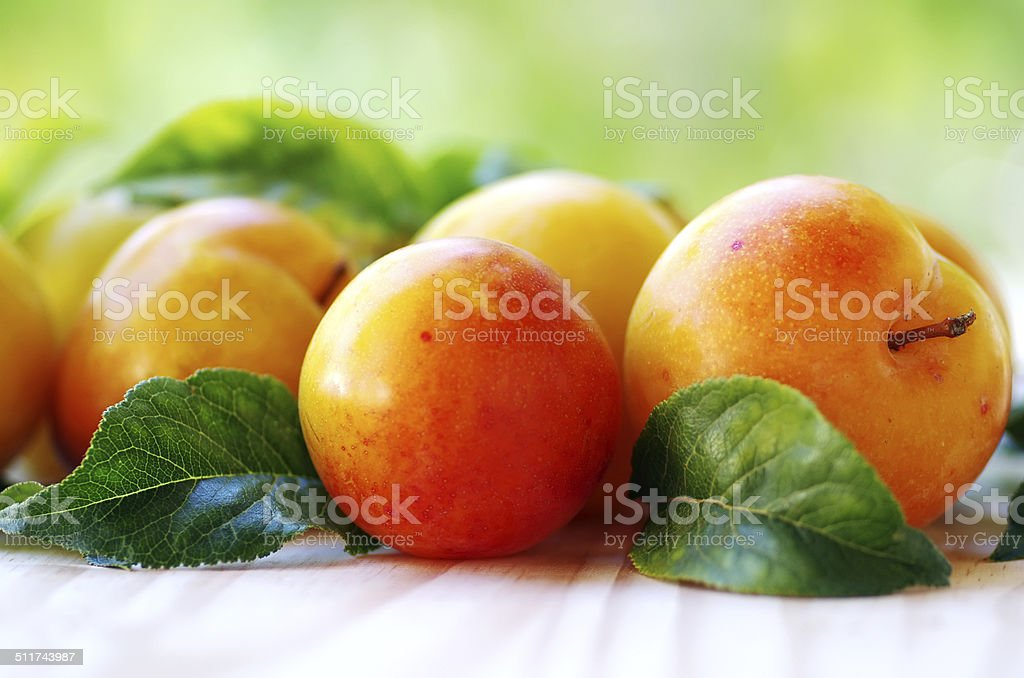 yellow plums on green background stock photo