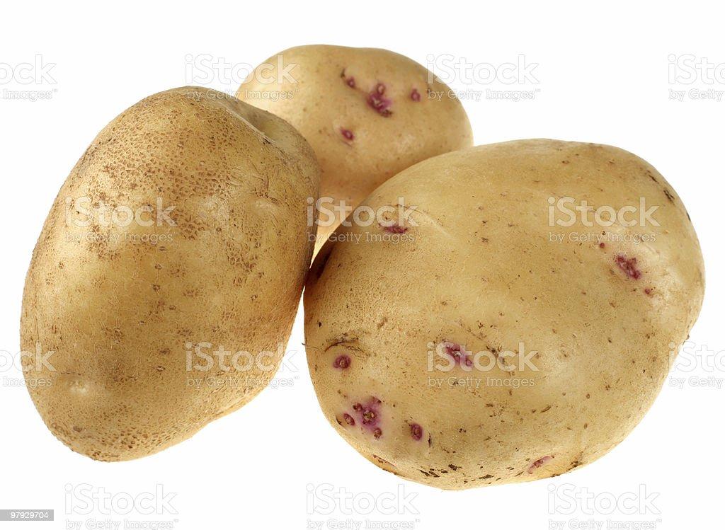 Yellow potato royalty-free stock photo