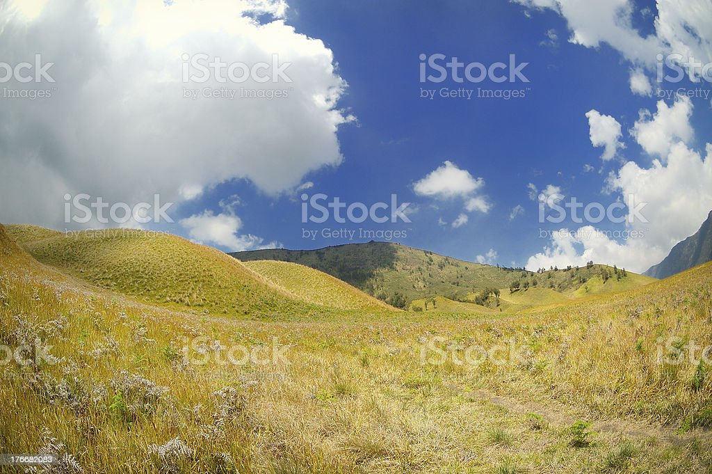 Yellow prairie landscape under bright blue skies royalty-free stock photo