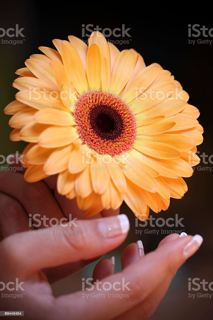 Yellow Purity royalty-free stock photo