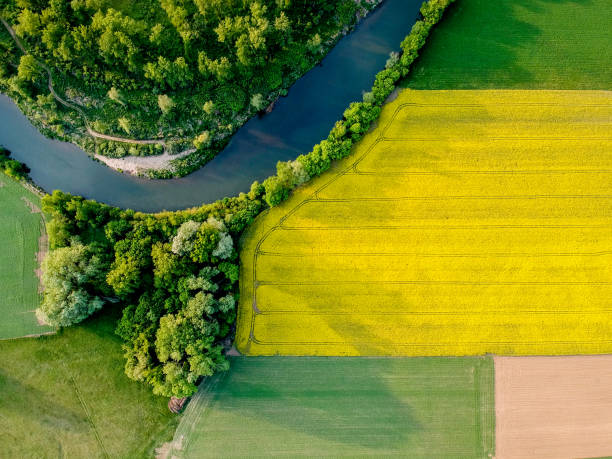 Yellow rapeseed field in bloom at spring Yellow field rapeseed in bloom aerial view stock pictures, royalty-free photos & images