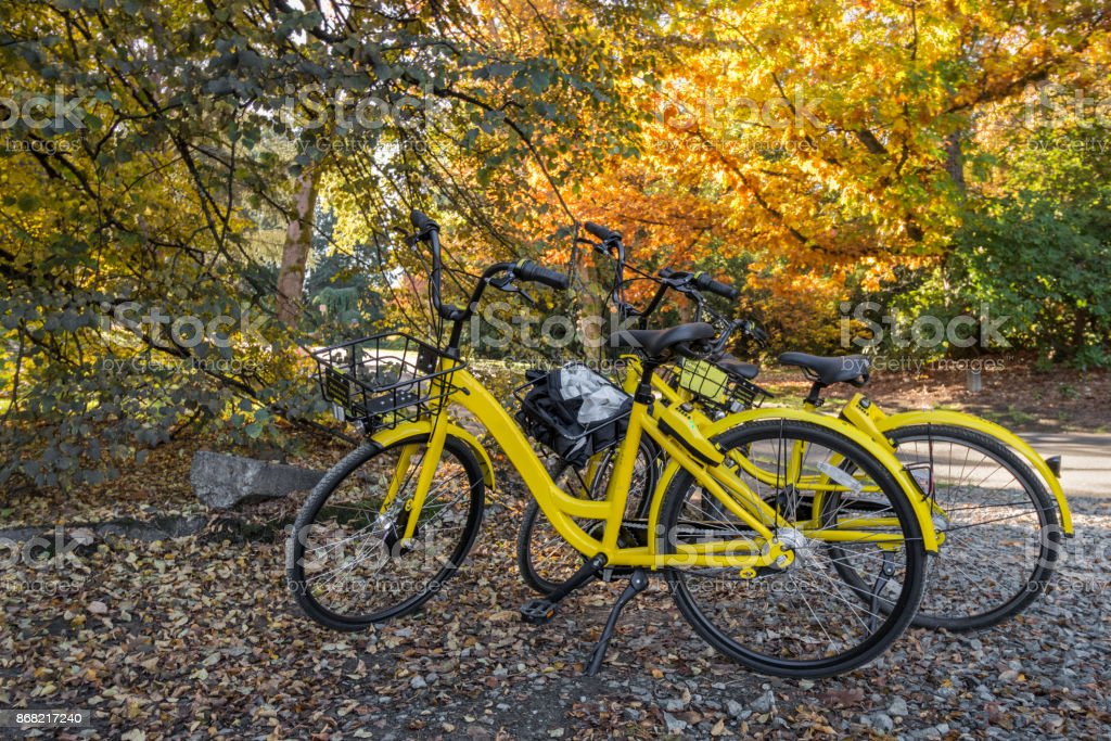 Yellow rental bicycles parked under trees stock photo