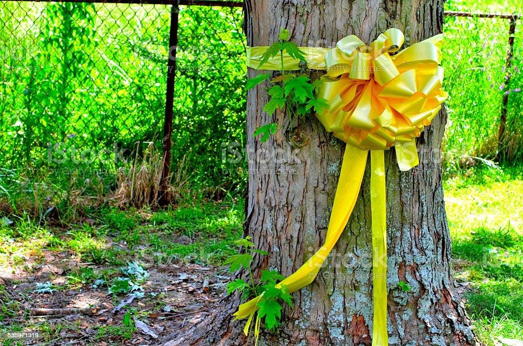 Yellow Ribbon tied around a maple tree stock photo
