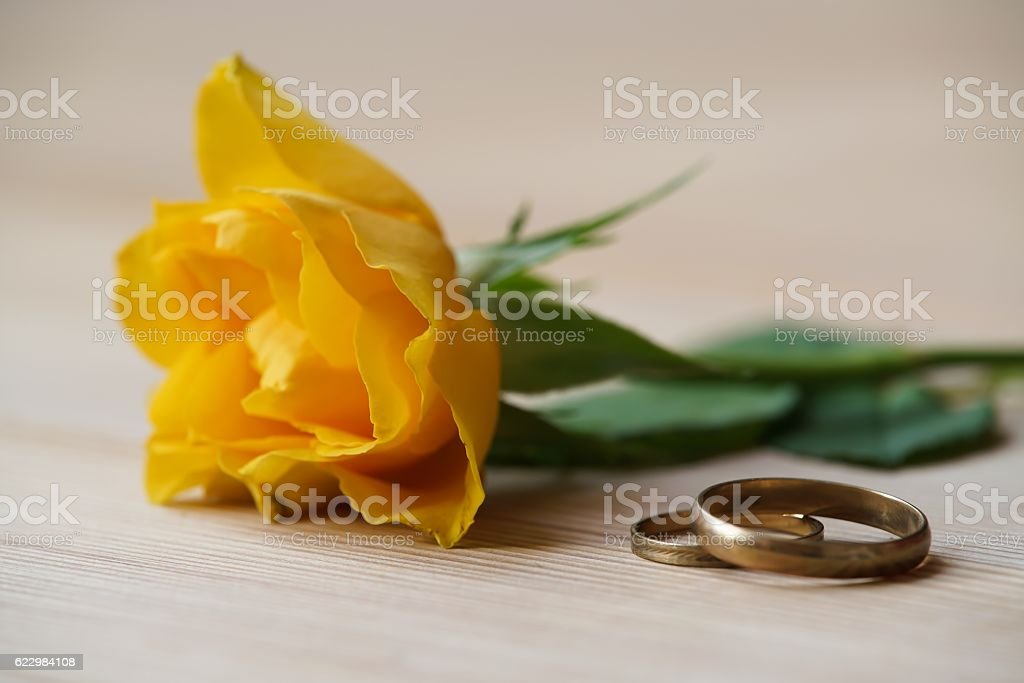 gelbe Rose und Eheringe stock photo