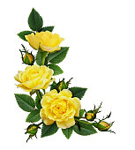 istock Yellow rose flowers in a corner arrangement 1133767480
