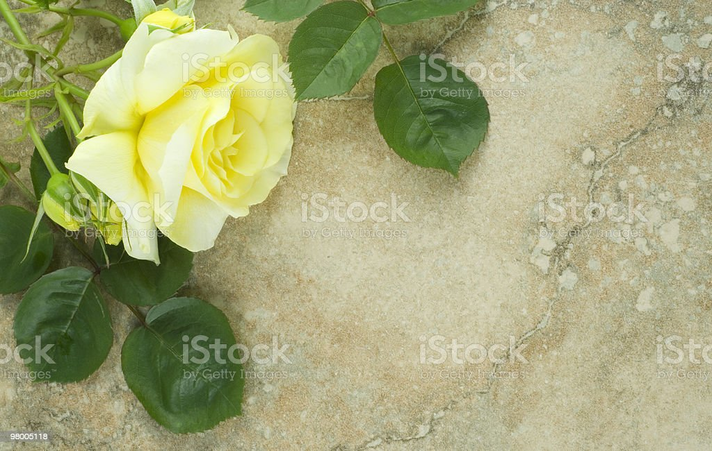 Yellow Rose Green Leaves Vintage Background royalty free stockfoto