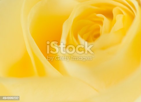 White anemones, yelow roses, eucalyptus leaves and freesia flowers in a corner arrangement isolated on white background. Flat lay. Top view.