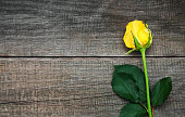 Yellow rose on a table