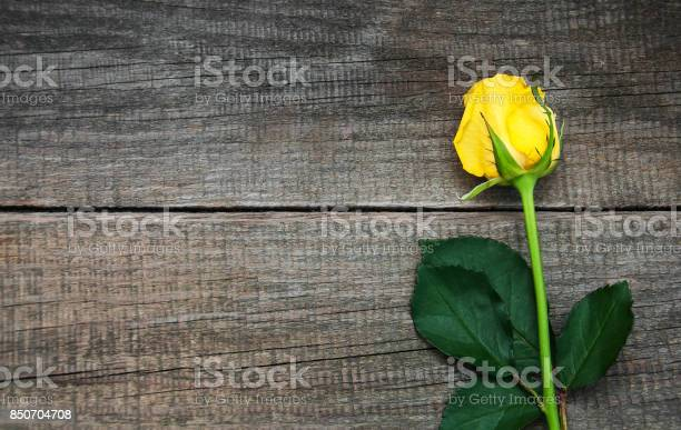 Yellow rose on a table picture id850704708?b=1&k=6&m=850704708&s=612x612&h=hcrnxdult8fll9ni ctfs7ucefqr isym9jxtnlz lu=