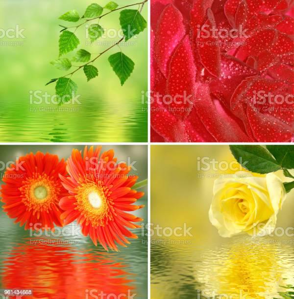 Yellow rose picture id961434668?b=1&k=6&m=961434668&s=612x612&h=vl6r7vqfsuxrkeghy5y8jxh4 w1jbfxzpey 4fbk9ks=