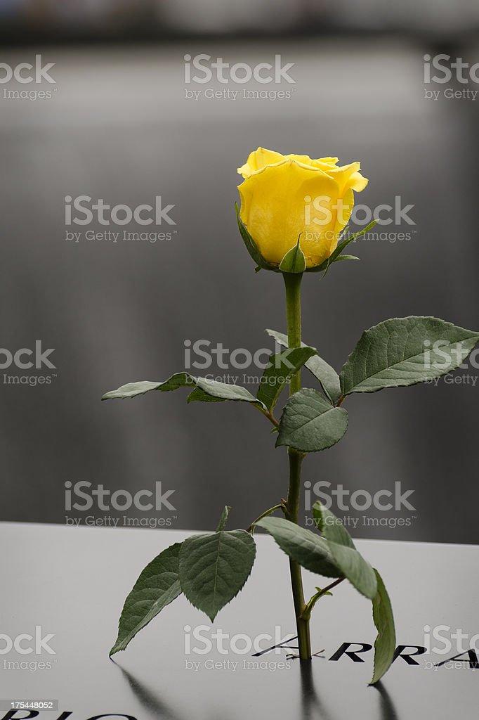 Yellow Rose Remembering September 11 Victim stock photo