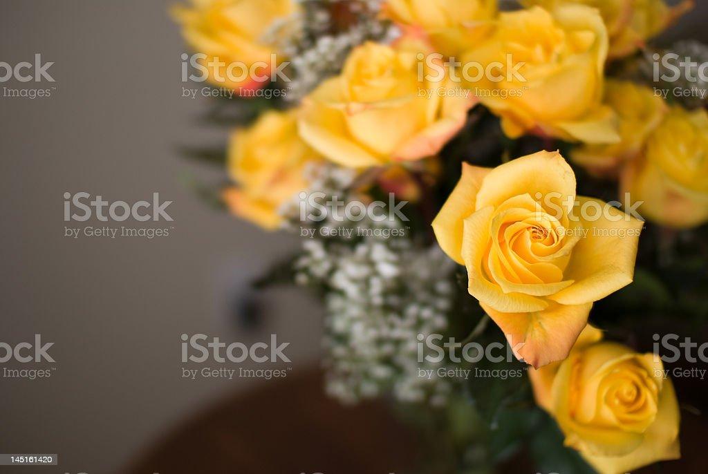 Yellow Roses Close Up royalty-free stock photo