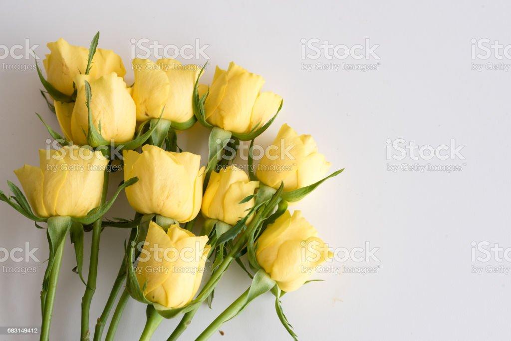 노란 장미를 테이블에 누워 royalty-free 스톡 사진