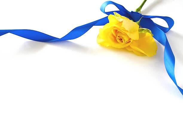 roses jaunes sur fond blanc - objet jaune photos et images de collection