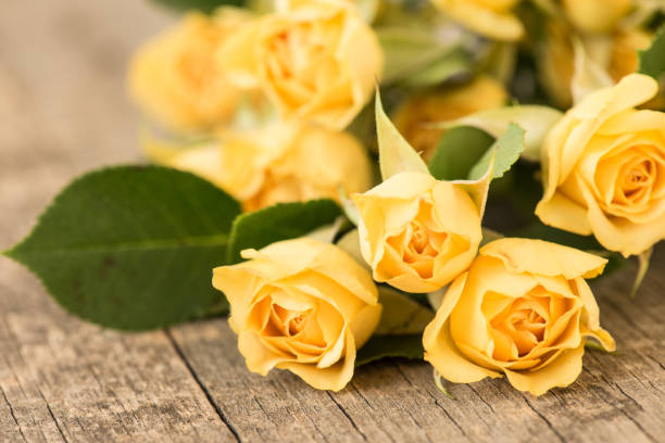 Yellow roses on vintage, rustic wooden background stock photo