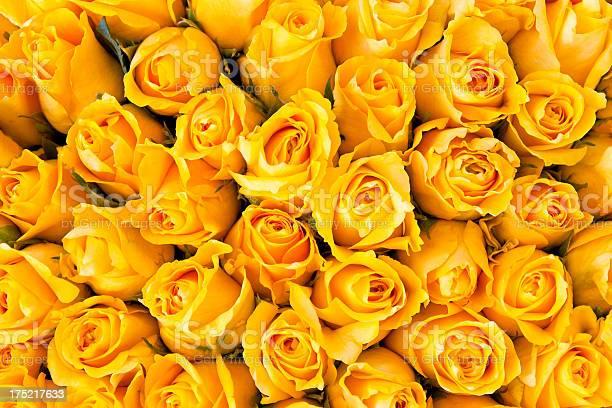 Yellow roses picture id175217633?b=1&k=6&m=175217633&s=612x612&h=lbl9jc3tx6ydkti0zf egsmrgwfknavplgfobek qpq=