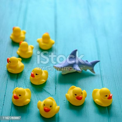 Yellow rubber ducks being chased by a ferocious rubber shark on a turquoise colored wooden grained background, conceptually representing water. Concept image representing survival, danger etc.