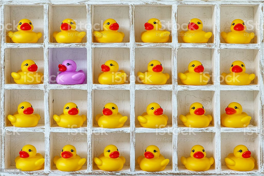 Yellow rubber ducks in pigeon holes, one purple duck. stock photo