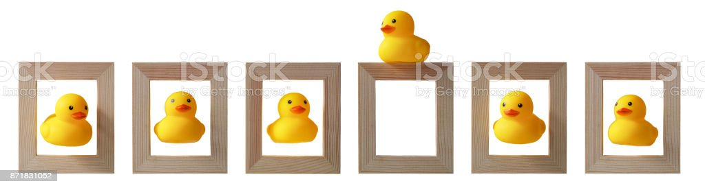 Yellow Rubber Ducks In Wooden Picture Frames With One Yellow Duck ...