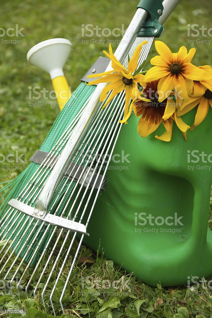 yellow rudbeckia flowers in a green watering can royalty-free stock photo