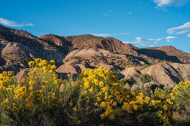 Sauge jaune des fleurs et des paysages de montagne - Photo