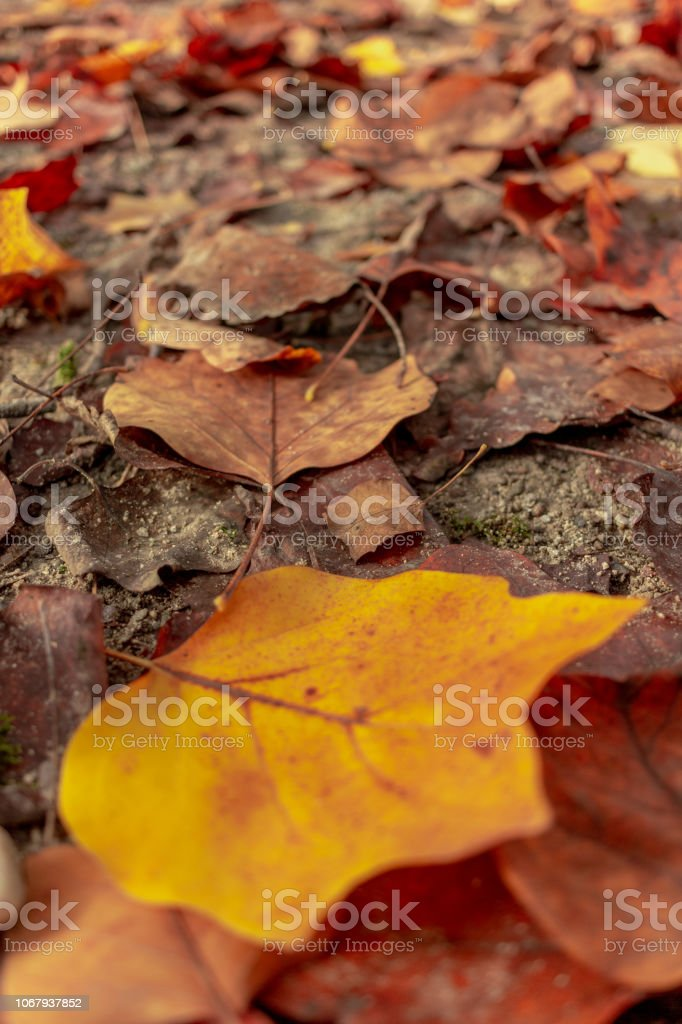 Yellow Saturated Leaf - foto stock