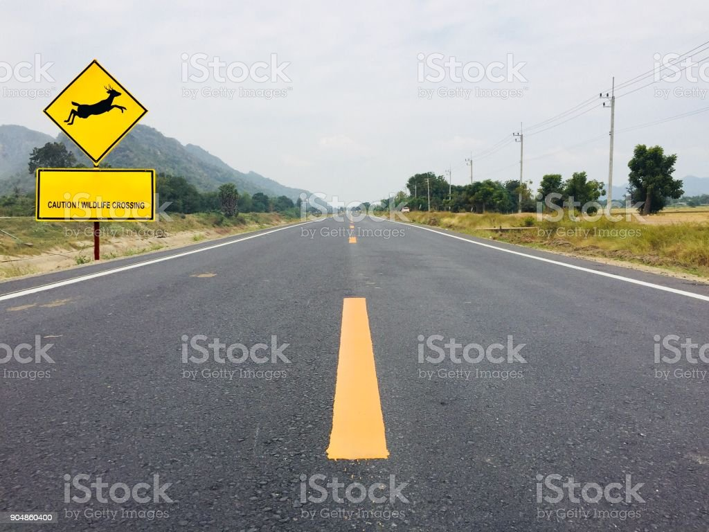 Yellow sign and deer jumping with text caution wildlife crossing stock photo