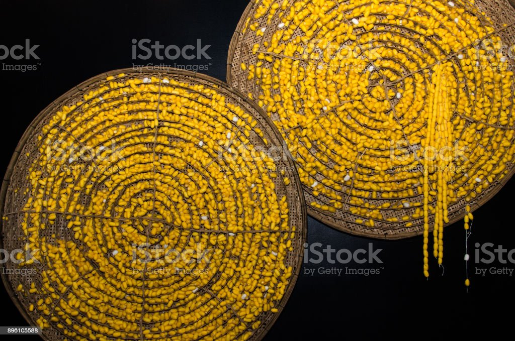 Yellow silkworm soft cocoon from Thailand stock photo