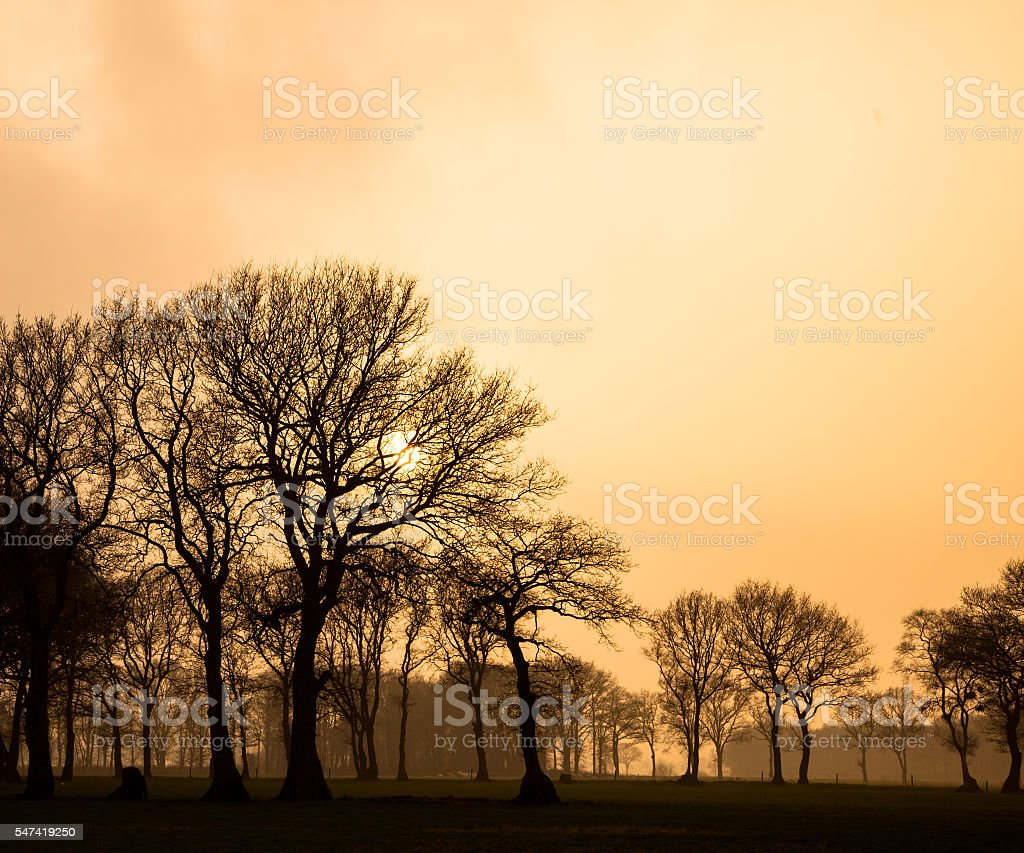 Yellow sky in rural landscape during foggy afternoon sunset stock photo