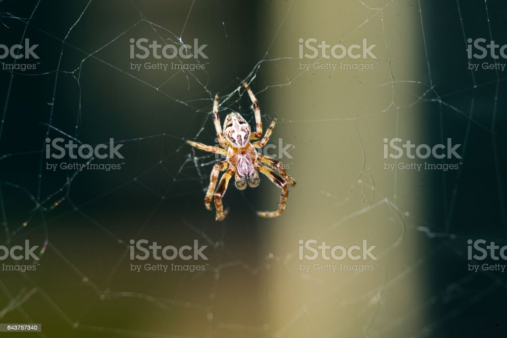 Yellow small spider stock photo